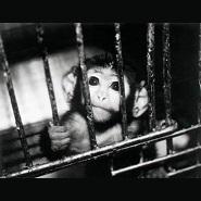Monkey_import