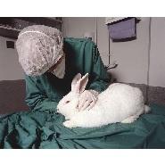 Bunny_test